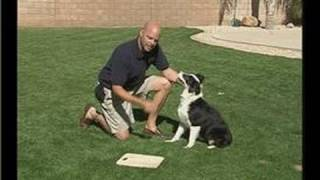 The Leave It Command In Dog Training : Training A Dog To Leave It