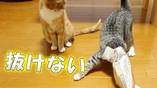 猫が保冷袋に頭を突っ込んでハマってしまう様子がおもしろい動画です。 ...