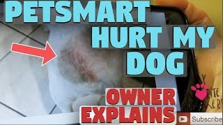 How PetSmart Hurt My Dog Owner Experience