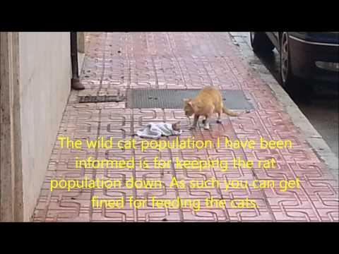 Kitten being saved in flood