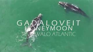 GadaLoveIt: Honeymoon- Our Stay at Tintswalo Atlantic