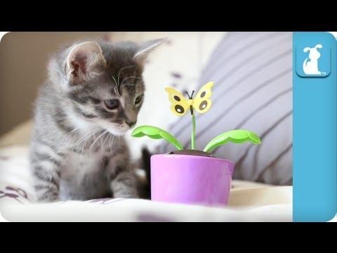 Kitten Understands The Importance of Solar Energy - Kitten Love