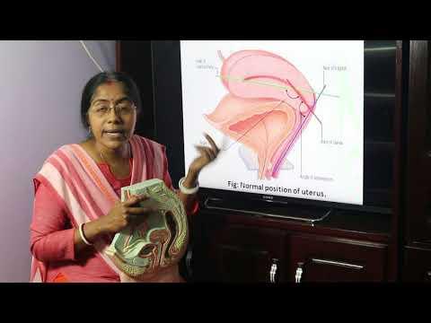 Lecture on Female genital organ