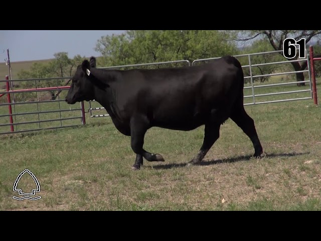 Pearcy Angus Ranch Lot 61