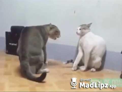 Gatos peleando versión turro