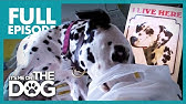 The Canine Criminal: Dally | Full Episode | It's Me or the Dog