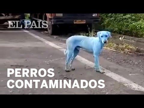 Perros azules en Bombay por el agua de un río contaminado | Mundo Global