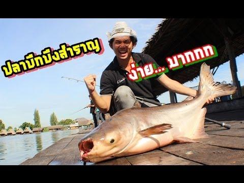 ตกปลาบึกที่บึงสำราญ เด็กๆอ่ะ by fishingEZ
