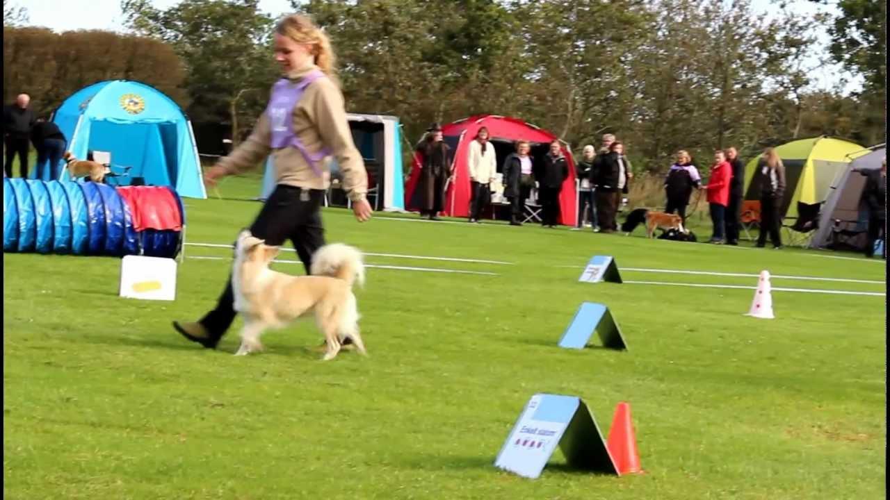 rally dog training