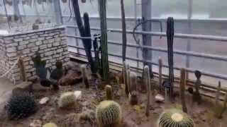 видео Трансферы в Балчике
