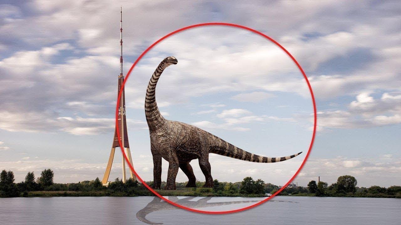 7 Dinosaurios Captados En Camara Y Vistos En La Vida Real Parte Dos Youtube Lo que ocurre con esta animación es que de repente todo cambia. 7 dinosaurios captados en camara y