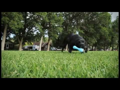 Fun Tough Zogoflex Dog Toys - Updated Video
