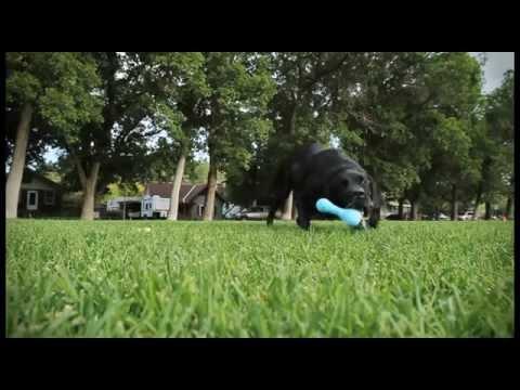 Fun Tough Zogoflex Dog Toys - Updated Video