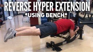 Bench Hyper Extension Exercise | Hyper Extension Alternative