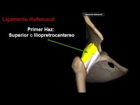 Ligamentos de la cadera - YouTube