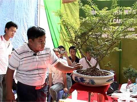 Video nghệ nhân Lâm Ngọc Vinh trình bày kỹ thuât tạo hình tiểu cảnh phần 6
