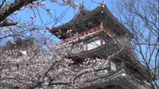 ありふれた日常の風景 2012.04.08 伏見桃山城の桜.