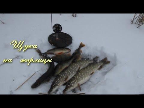 Рыбалка на щуку зимой на жерлицы  видео отчот  Pike Fishing Winter