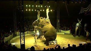 Шоу слонов в Новошахтинске