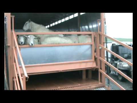 Agrimac Livestock Trailer