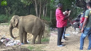 Adventures of a wildlife officer, Treating elephants thumbnail