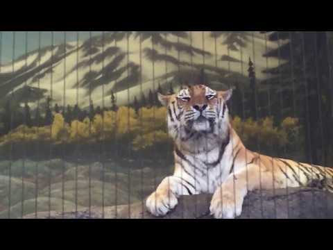 Tiger Meow Frightens Kiddies at Lincoln Park Zoo