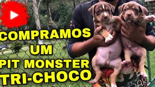 COMPRAMOS UM PADREADOR DE PIT MONSTER TRI-CHOCO PRO PLANTEL