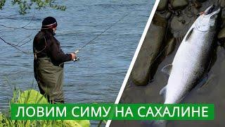 Ловим симу Сахалинская рыбалка на вишневого лосося