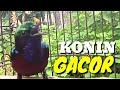 Kolibri Ninja Gacor Tembakan Emosi Ampuh Buat Pancingan Dan Masteran  Mp3 - Mp4 Download