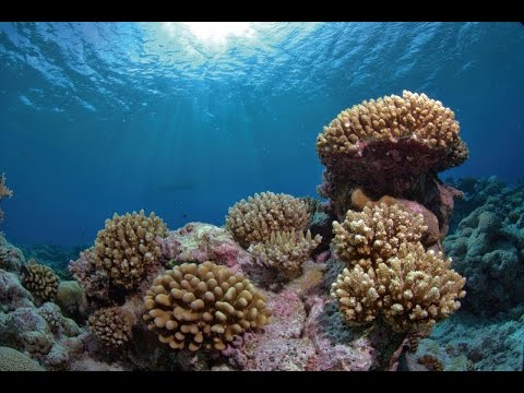 British Indian Ocean Territory – underwater