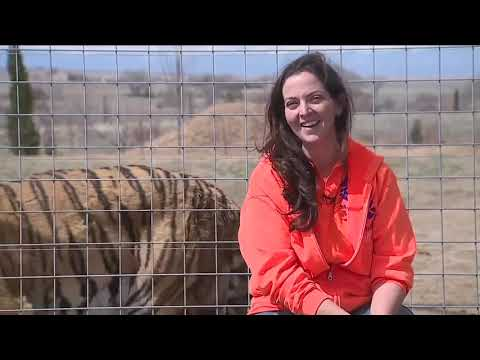 39 Tigers From Netflix Series 'Tiger King' Are Now Living In A Colorado Animal Sanctuary
