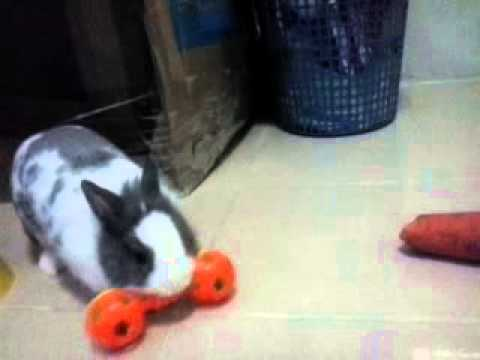 กระต่ายน่ารัก ออกกำลังกาย