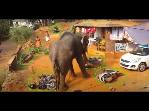 Kerala elephant attack youtube - photo#54