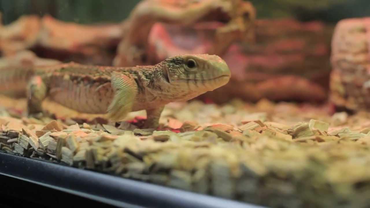 Ролики про рептилий фото 781-277