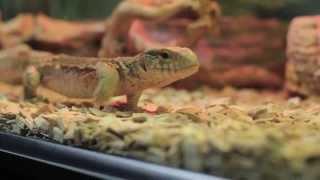 Все О Домашних Животных: Выбор Рептилии Для Ребенка