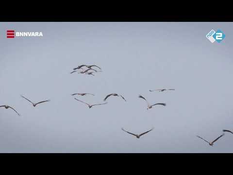 Vroege Vogels -