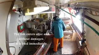 Presentation of the Automatic Longline Hauler System (ALH) - English text