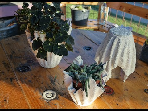 How to make Cement Planters - DIY Cement Planter