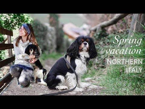 Vacation with dog in Northern Italy | City Trip & Hiking with a Cavalier King Charles Spaniel