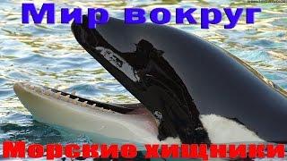 Морские хищники. Морской мир HDTVRip720p