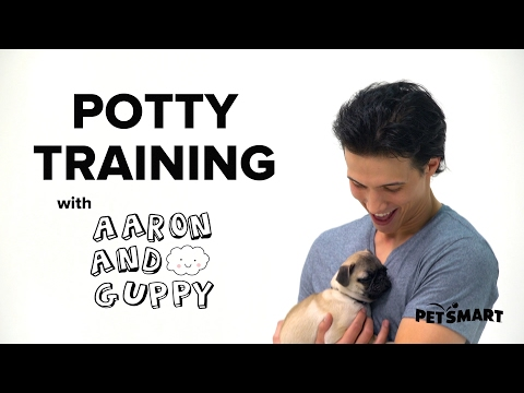 Petsmart Puppy Training How To Potty Train Puppy