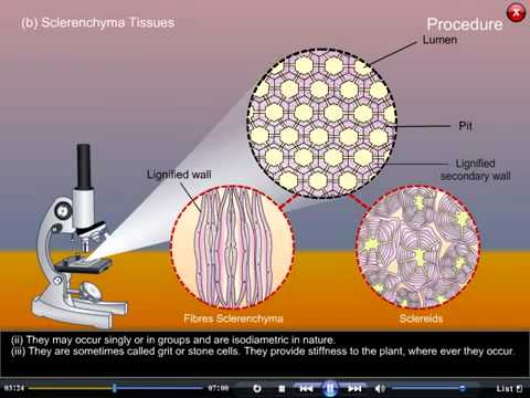 plant tissues biology