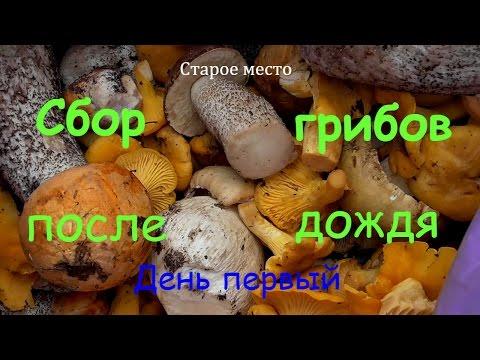 Грибы-двойники. Названия и описание самых опасных грибов