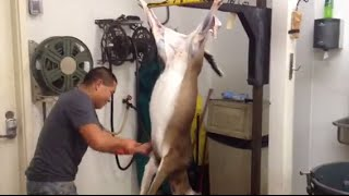 Fastest Deer Skinner In The World!!!