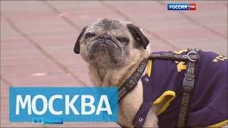 В центре Москвы объявлен карантин по бешенству