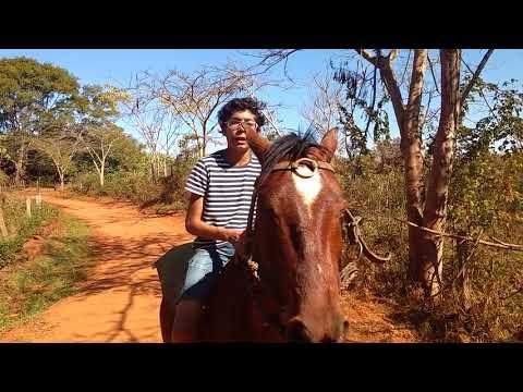 Andando a cavalo na fazenda
