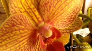 aea0a0a7d Орхидея цветок в горшке купить в Одессе. Продажа на Zakupka.com ...