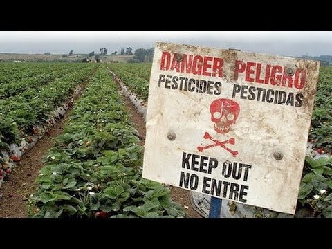 GMO and Pesticide Dangerous Effects