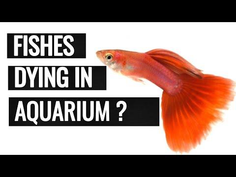 Why Fishes Die In New Aquarium