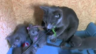 Смешное видео про кошку и котят
